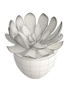 collection-de-plantes-et-fleurs-3d-plantes-grasses-5-filaire