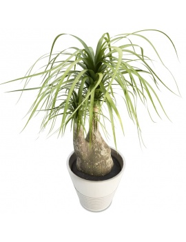 office-space-and-desk-accessories-3d-beaucarnea-plant