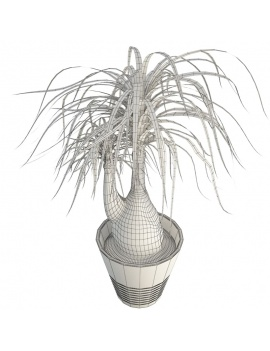 office-space-and-desk-accessories-3d-beaucarnea-plant-wireframe