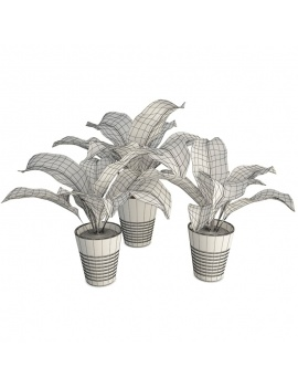 office-space-and-desk-accessories-3d-dieffenbachia-plant-wireframe